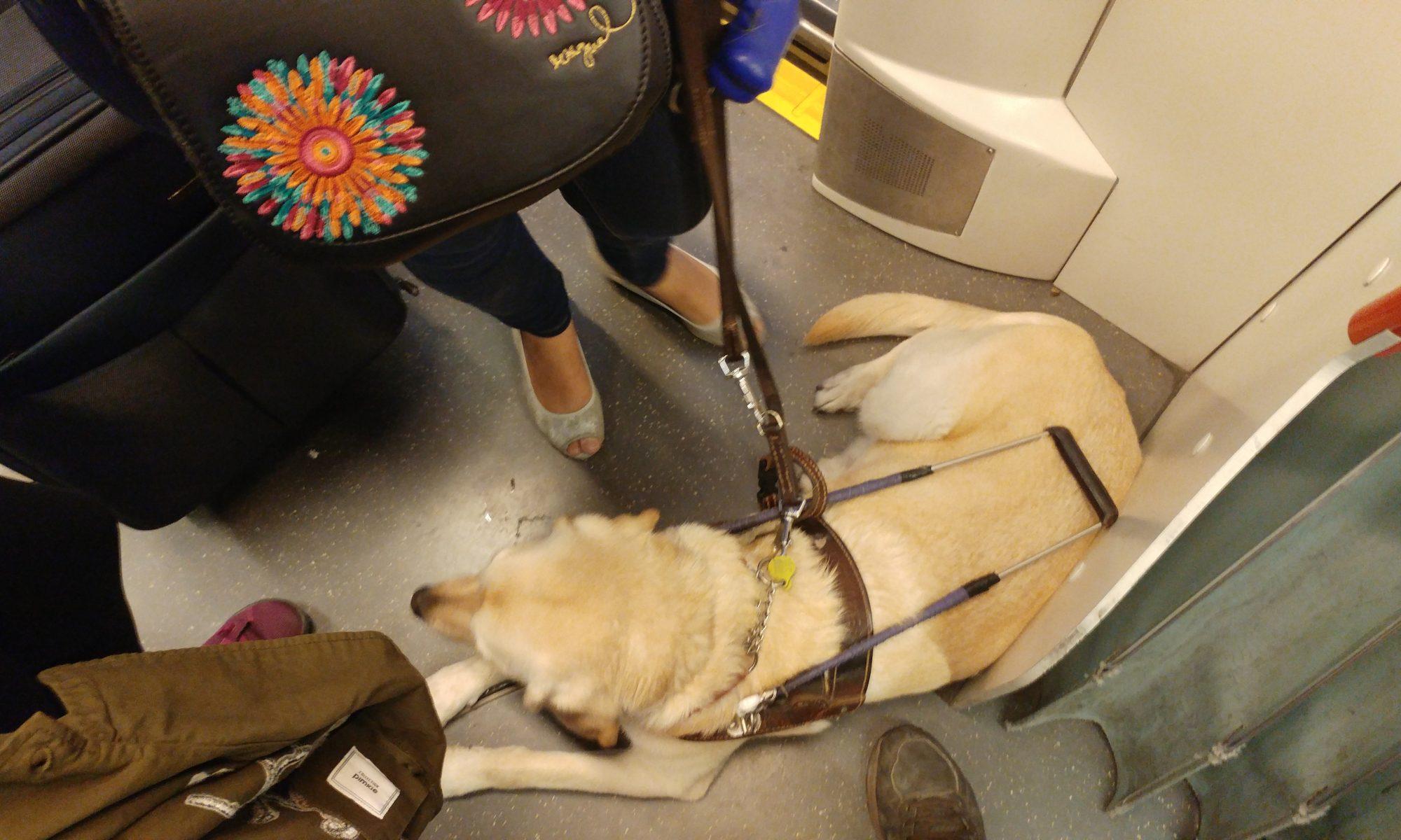 Muriel en el tranvía de Zaragoza a los pies de Ana