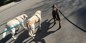 Rumba, Muriel y Salsa caminando juntas
